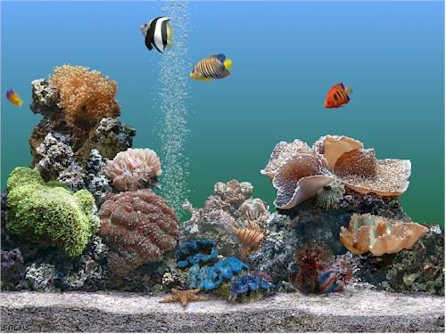 backgrounds for aquariums